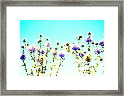 Like Early Flowers In Blue We Are  Framed Print
