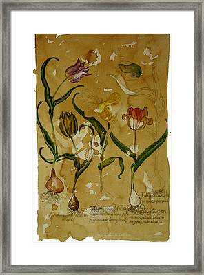 Flowers In Herbarium Framed Print by Arual Jay