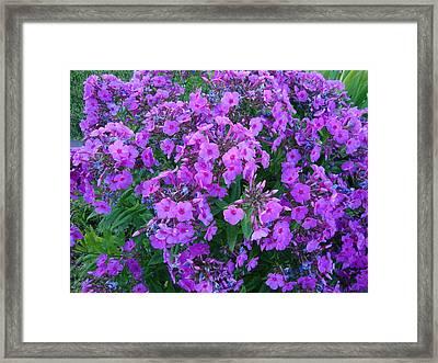 Flowers In Idaho Falls Framed Print by Iam Wayne