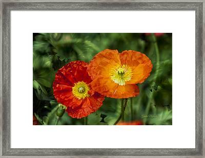 Flowers In Kodakchrome Framed Print