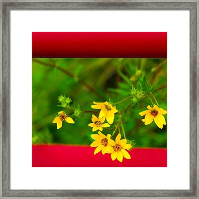 Flowers In Red Fence Framed Print