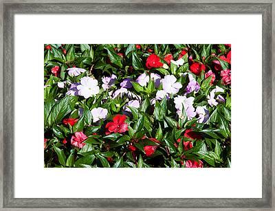 Flowers In The Garden At Villa Framed Print