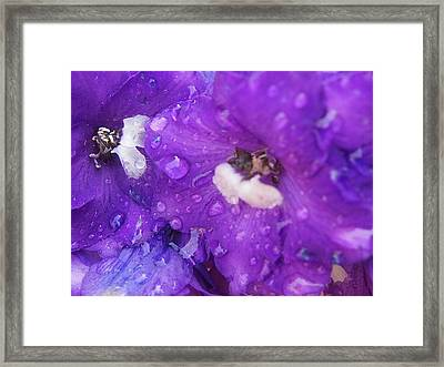 Flowers In The Rain Framed Print by Chrissy Dame