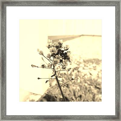 Flowers In The Shade Framed Print by Jaime Neo