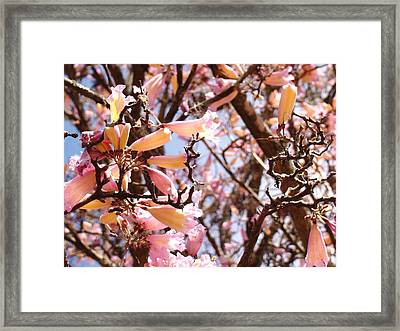 Flowers In The Tree In Three Dimensions Framed Print by Van Ness