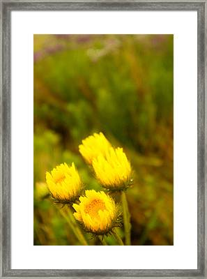 Flowers In The Wild Framed Print