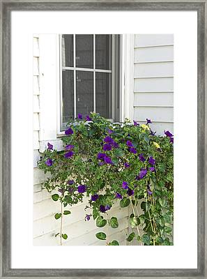 Flowers In Windowbox Framed Print by Gail Maloney
