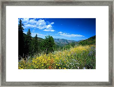Flowers In Yellowstone Framed Print by Larry Moloney