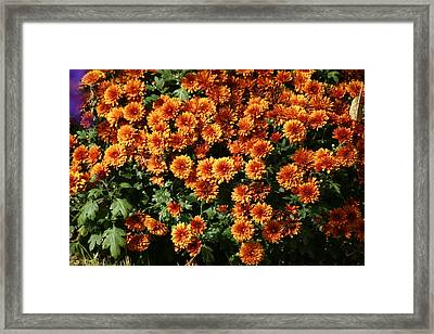 Flowers Framed Print by James Thornsbury