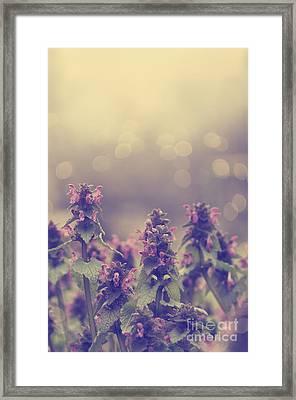 Flowers Framed Print by Jelena Jovanovic