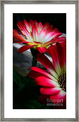 Flowers Just For Mr. Toes Framed Print