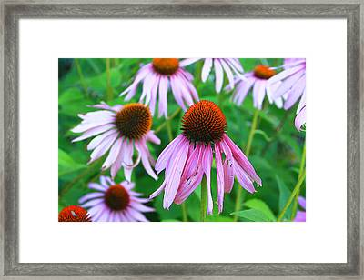 Flowers Framed Print by Lisa Alex