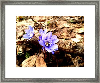 Framed Print featuring the photograph Flowers by Lucy D