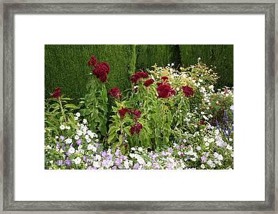 Flowers Of Alhambra Framed Print