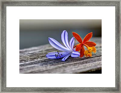 Flowers Of Blue And Orange Framed Print