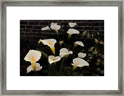 Flowers Of Ireland  Framed Print