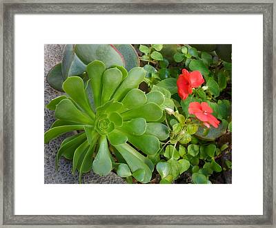 Flowers Of Laguna Woods Framed Print
