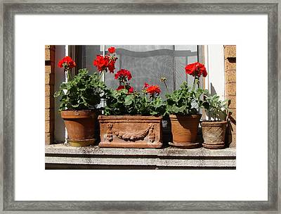 Framed Print featuring the photograph Flowers Of New York by Ira Shander
