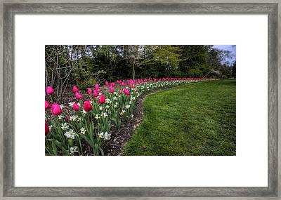 Flowers Of Spring Framed Print