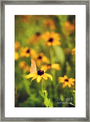 Flowers Of Summer Framed Print by Darren Fisher