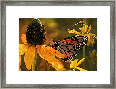 Flowers Of The Day Framed Print by Donna Kennedy
