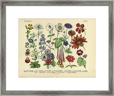 Flowers Of The Garden, Victorian Framed Print by Bauhaus1000