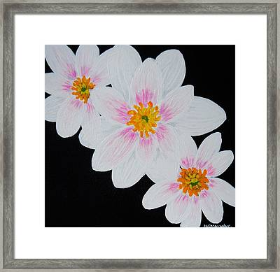 Flowers Of The Night Framed Print by Celeste Manning