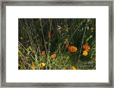 Flowers Of Wild  Framed Print
