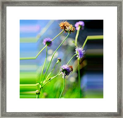 Flowers On Summer Meadow Framed Print by Tommytechno Sweden
