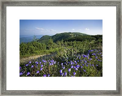 Flowers On Summer Mountain  Framed Print by Ioan Panaite