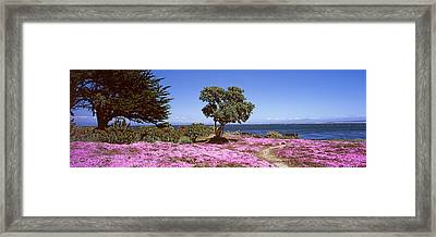 Flowers On The Beach, Pacific Grove Framed Print by Panoramic Images