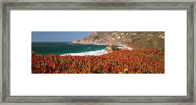 Flowers On The Coast, Big Sur Framed Print