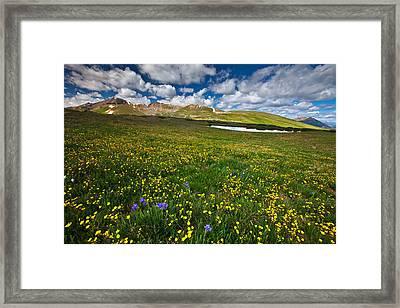 Flowers On The Divide Framed Print by Darren  White