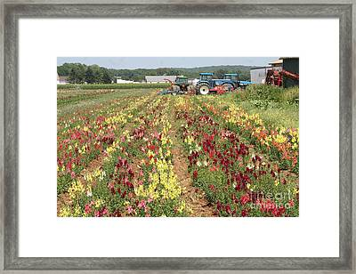 Framed Print featuring the photograph Flowers On The Farm-1 by Steven Spak