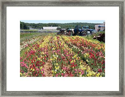 Framed Print featuring the photograph Flowers On The Farm-2 by Steven Spak