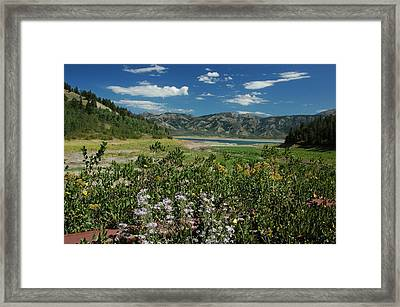 Flowers On The Palisades Resevoir Idaho Framed Print by Larry Moloney
