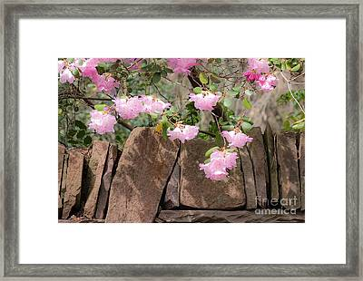 Framed Print featuring the photograph Flowers On The Wall by Juergen Klust