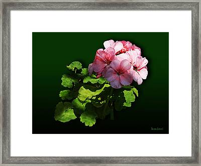 Flowers - Pale Pink Geranium Framed Print by Susan Savad