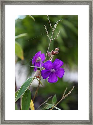 Flowers - Panviman Chiang Mai Spa And Resort - Chiang Mai Thailand - 01132 Framed Print by DC Photographer