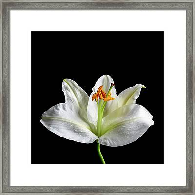 Flower's Reproductive Structures Framed Print