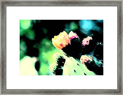 Flowers That Cactus Do Framed Print by Carolina Liechtenstein