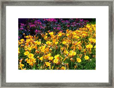 Flowers Framed Print by Tim McCullough