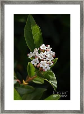 Flowers-tiny White Framed Print by Joy Watson