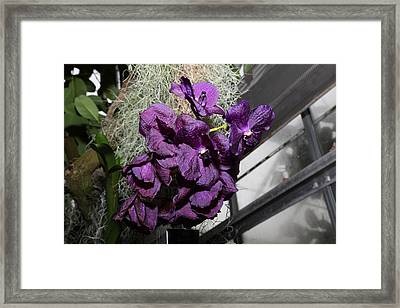 Flowers - Us Botanic Garden - 011313 Framed Print by DC Photographer