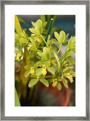 Flowers - Us Botanic Garden - 01135 Framed Print by DC Photographer