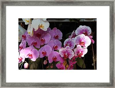 Flowers - Wat Phrathat Doi Suthep - Chiang Mai Thailand - 01131 Framed Print