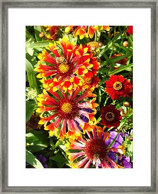 Flowers With Pollinators Framed Print by Van Ness