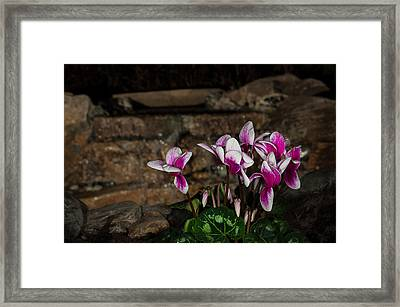 Flowers With Waterfall Backdrop Framed Print by Len Romanick