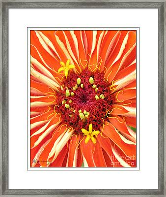 Flowers Within A Flower Framed Print
