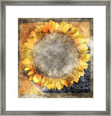 Flowersun - 09279gmn22b3a22 Framed Print by Variance Collections